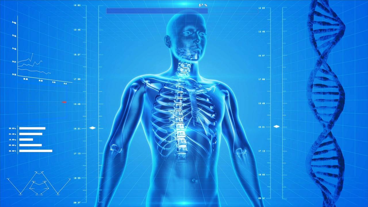 Bodys Endocannabinoid System